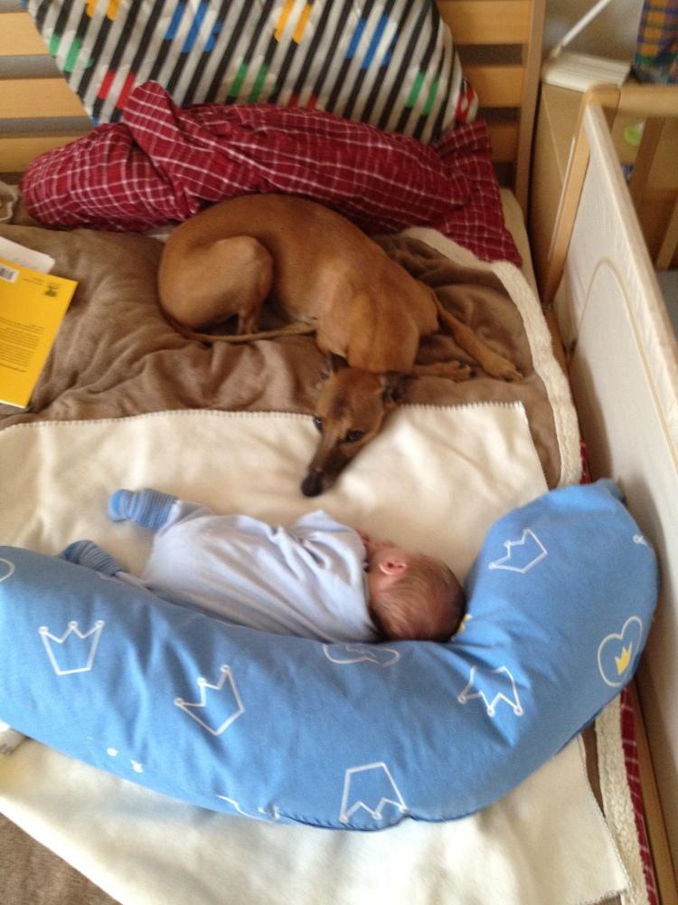 Hunde im Bett (2/2)