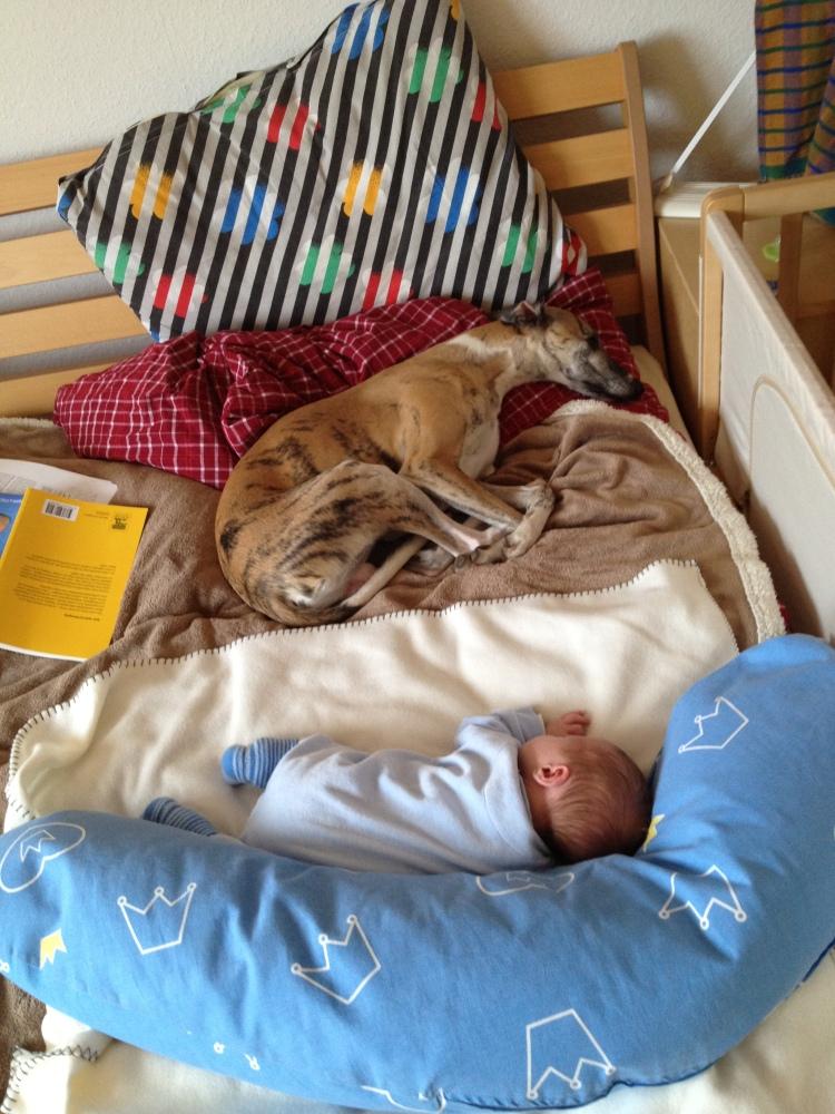 Hunde im Bett (1/2)